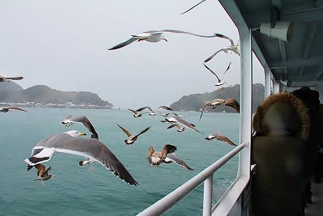 遊覧船で伊根湾めぐり