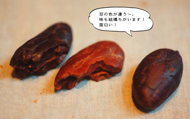カカオ豆 色の違い 味の違い