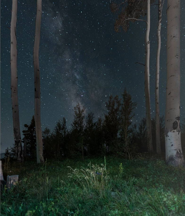 苔むす森を思わせる『寺院へと続く道』