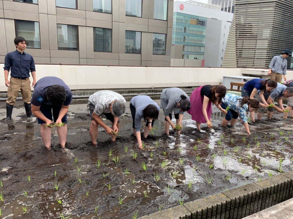 白鶴銀座天空農園のプロジェクト 田植え体験