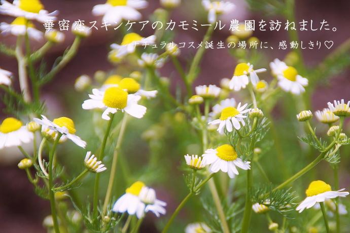 華密恋 ブログ 口コミ