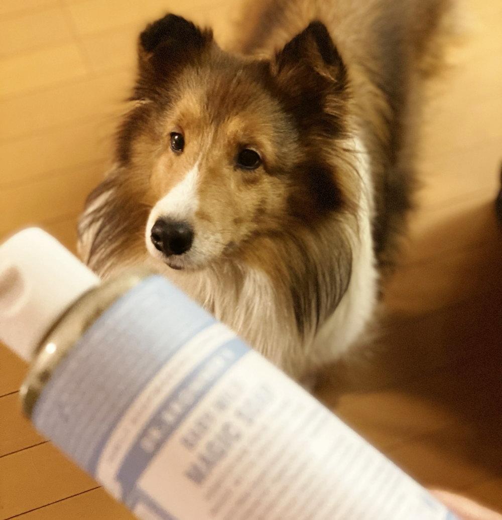 マジックソープで愛犬を洗ってみた
