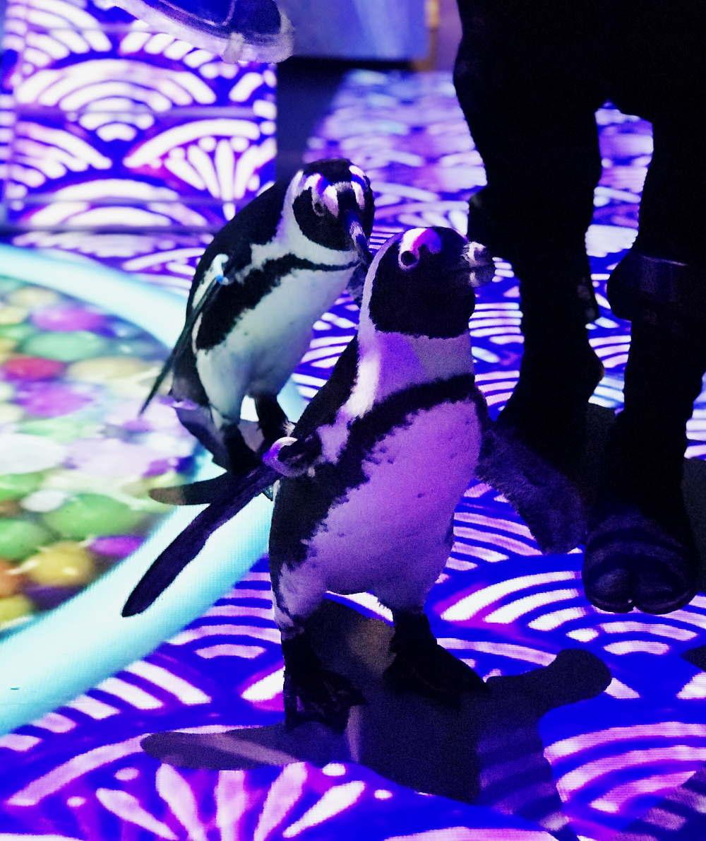 パターンズ ウミノ縁日(うみの-えんにち) ナイトバージョン「宵のペンギン」