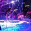 マクセル アクアパーク品川 イルカショー NAKED花火アクアリウム ナイトver. 瑠璃花火(るり-はなび)