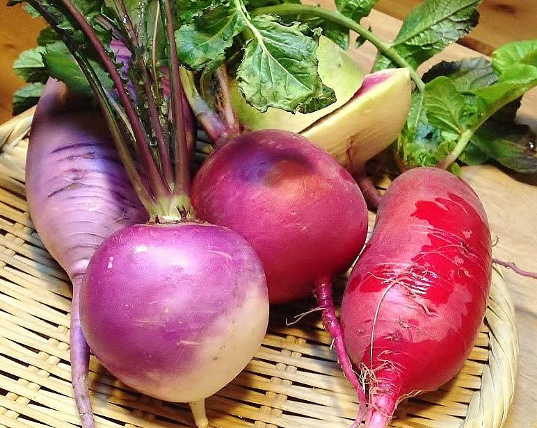 大和野菜 赤カブ