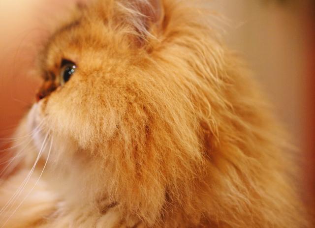 猫カフェ 写真