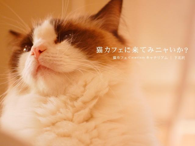 下北沢 猫カフェ キャテリアム