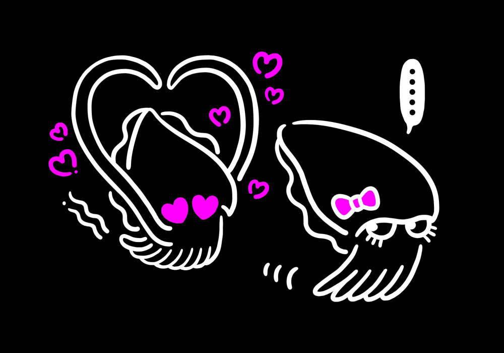 コウイカの交尾