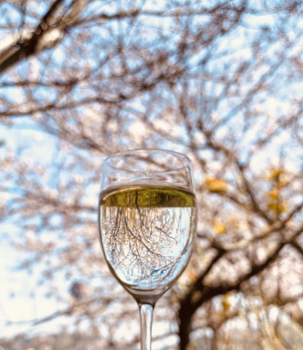 お花見におすすめの女性向けワイン