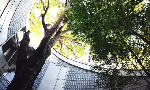 羽根木の森 キッチンスタジオ