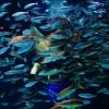 サンシャイン水族館 水中パフォーマンスタイム