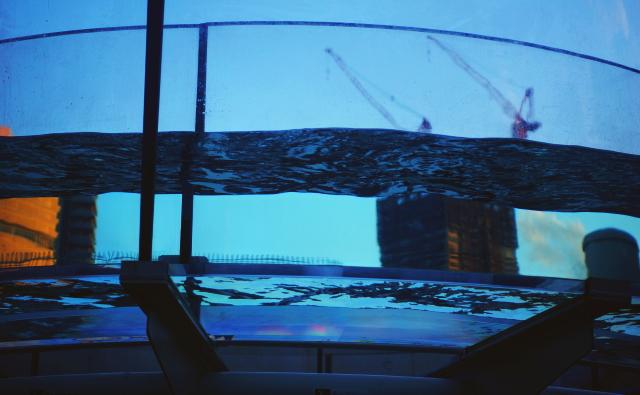 屋外水族館 チューブ アシカ