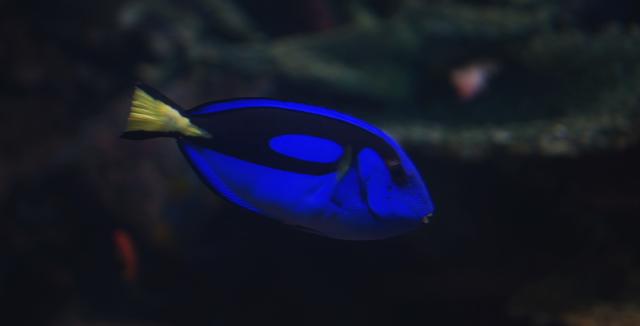 サンシャイン水族館 写真