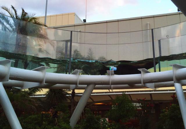 空飛ぶアシカ サンシャイン水族館